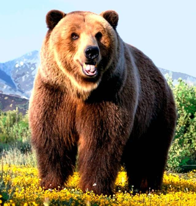 Bear- LArge Brown Bear