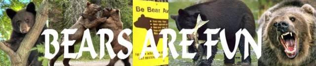 bears are fun   wild animal worlds  wildlife