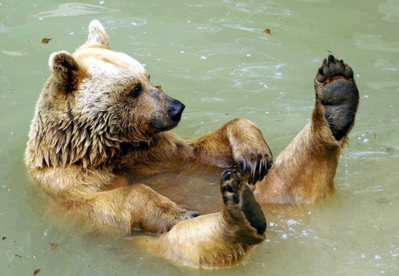 Bears in action
